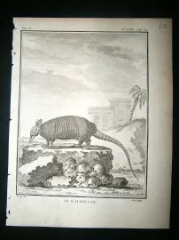 Buffon C1770 Armadillo, Antique Print.